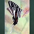 Zebra Swallowtail Butterfly By George Wood by Karen Adams