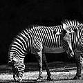 Zebra Unique Patterns by Diane Dugas