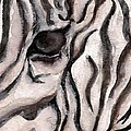 Zebra Watercolor by Laurie Pike