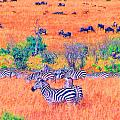Zebras Above The Beast by Joseph Wiegand