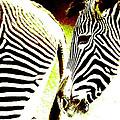 Zebras by Dick Swift