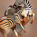 Zebras Fighting by Johan Swanepoel
