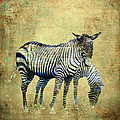 Zebras Grazing by Sandra Selle Rodriguez