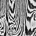 Zebras In Wood by Shannon Story
