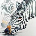 Zebras by Mary Zins