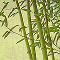 Zen Bamboo Abstract I by Marianne Campolongo