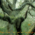 Zen Forest by Tara Miller