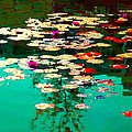 Zen Garden Water Lilies Pond Serenity And Beauty Lily Pads At The Lake Waterscene Art Carole Spandau by Carole Spandau