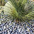 Zen Landscape by Gerry Fortuna