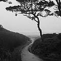 Zen Path by HW Kateley