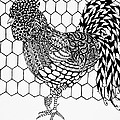 Zentangle Rooster by Jani Freimann