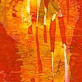 Zest by Lynda Hoffman-Snodgrass