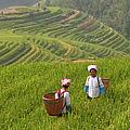 Zhuang Minority Women Walk Through Rice by Diana Mayfield