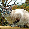 Zing The Cat In The Fall by Duane McCullough