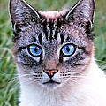 Zing The Cat Looking At Us by Duane McCullough