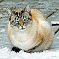 Zing The Cat On The Porch In The Snow by Duane McCullough