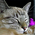 Zing The Cat Sleeping by Duane McCullough
