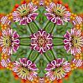 Zinging Zinnia Kaleidoscope by Kathy Clark