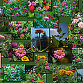 Zinnias Collage Rectangle by Thomas Woolworth