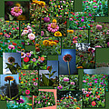 Zinnias Collage Square by Thomas Woolworth