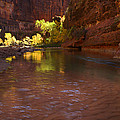 Zion Canyon Of The Virgin River by Susan Rovira