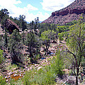 Zion National Park 1 by Nancy L Marshall