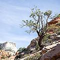 Zion National Park 1 by Natalie Rotman Cote