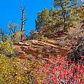 Zion Reds by John M Bailey