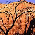 Zion Tree by Jeff Leland