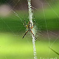 Zipper Spider by Carol  Bradley