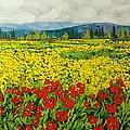 Zone Des Fleur by Allan P Friedlander