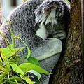 Zoo Life 2011.no.3  by RL Clough