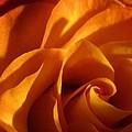 Zowie Rose by Carolyn Jacob