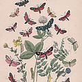 Zygaenidae - Syntomidae by W Kirby