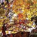 Autumn High by Carolyn Wright