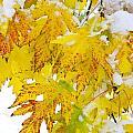 Autumn Snow Portrait by James BO  Insogna