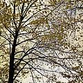 Branch Of Tree In Autumn by Daniel Blatt