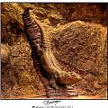 Bronze Lizard by Beverly Cash