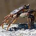 Crab On Rock by Trevor C Steenekamp
