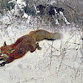 Fox Being Chased Through The Snow  by Bruno Andreas Liljefors