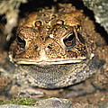 Grumpy Toad by Kathy Gibbons