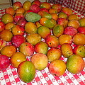 Just Picked Florida Mangoes by Trudy Brodkin Storace