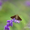 Little Skippers Happy Place by Kathy Gibbons