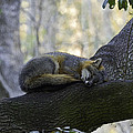 Midday Nap by Terry Cotton