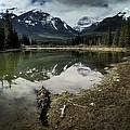 Muleshoe Pond Reflection Banff by Diane Dugas