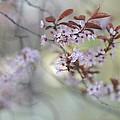 Petals by Guranda Anchabadze