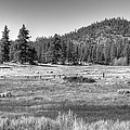 Prairie In South Lake Tahoe by Diego Re