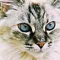 Pretty Blue Eyes--mia by Larry Allan