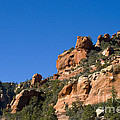 Red Rock And Pines by Ron Telford
