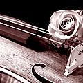 Rose Violin Viola by M K  Miller